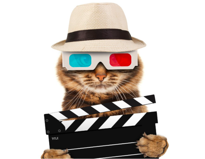 Five tips  for becoming a video sensation